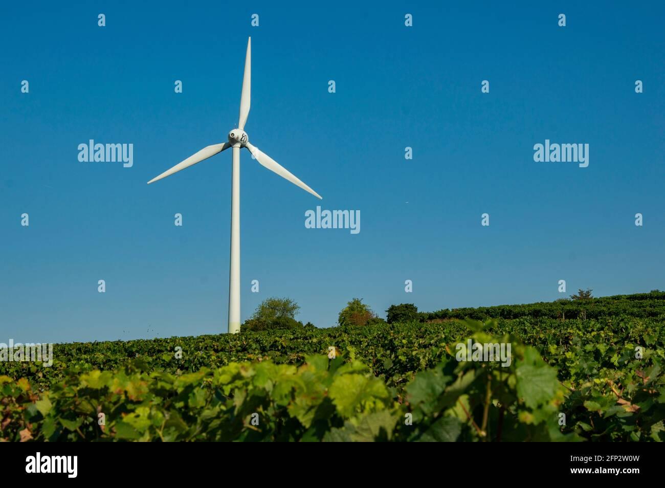 A Wind Turbine Between Vineyards Against A Blue Sky. The Wind Turbine Is In Rheinhessen Rhineland-Palatinate Near The Village Of Eimsheim. Stock Photo