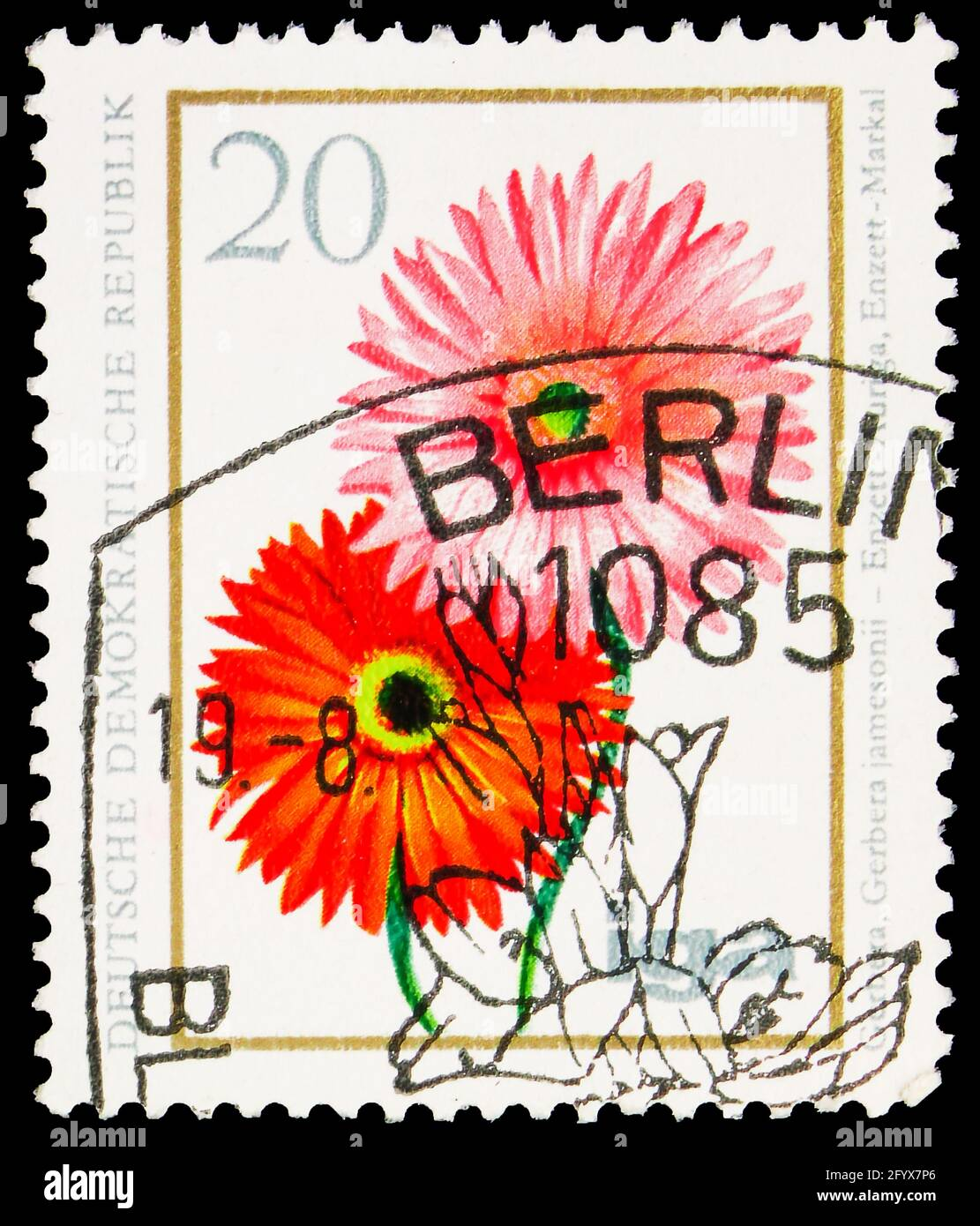 MOSCOW, RUSSIA - SEPTEMBER 27, 2019: Postage stamp printed in Germany, Democratic Republic, shows Gerbera, 20 Pf. - East German pfennig, Flowers serie Stock Photo