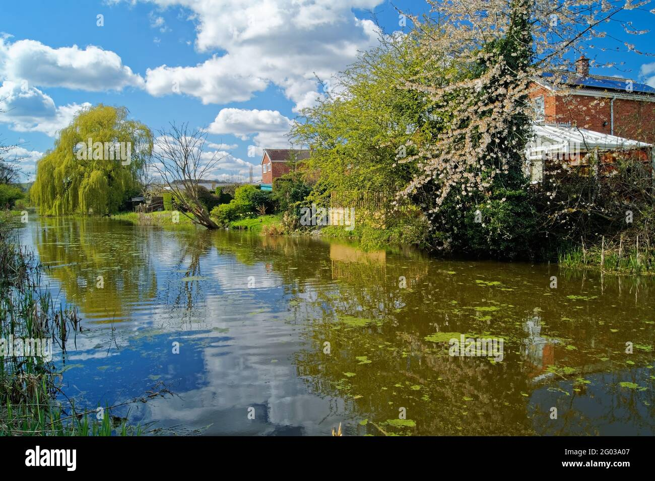 UK,South Yorkshire,Barnsley,Elsecar Canal and Footpath with Blossom in  bloom Stock Photo