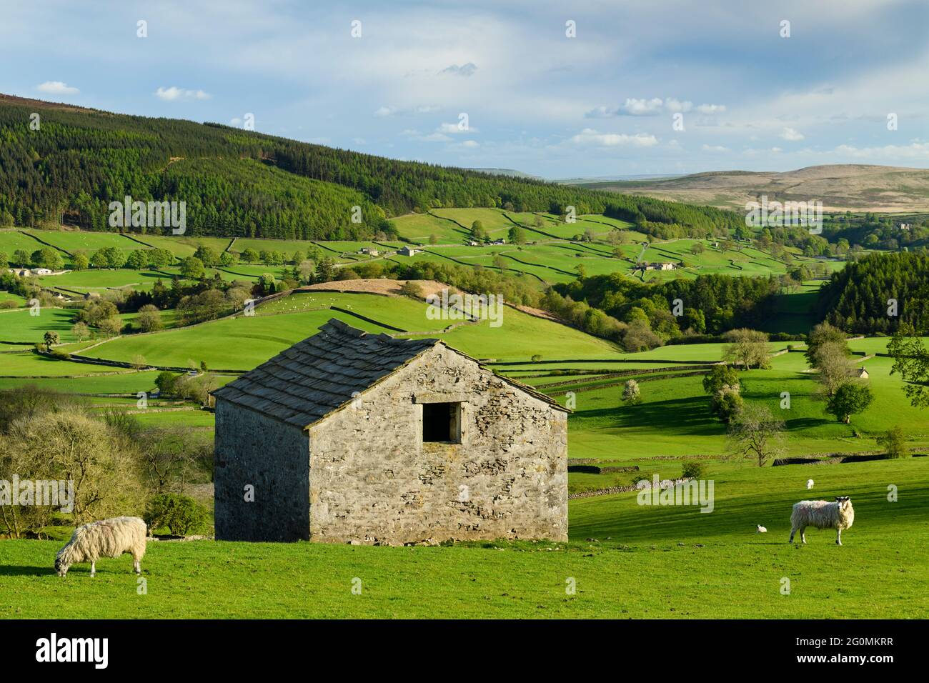 Scenic Wharfedale countryside (valley, hillsides, isolated rustic field barn, drystone walls, green farmland pastures) - Yorkshire Dales, England, UK. Stock Photo