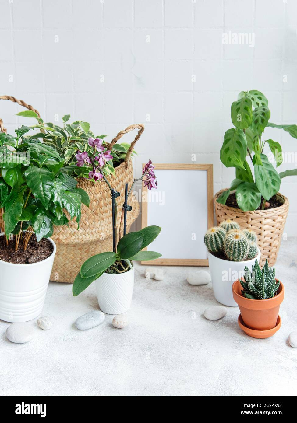 Room filled with a lot of modern plants, home garden with mock up poster frame. Stock Photo