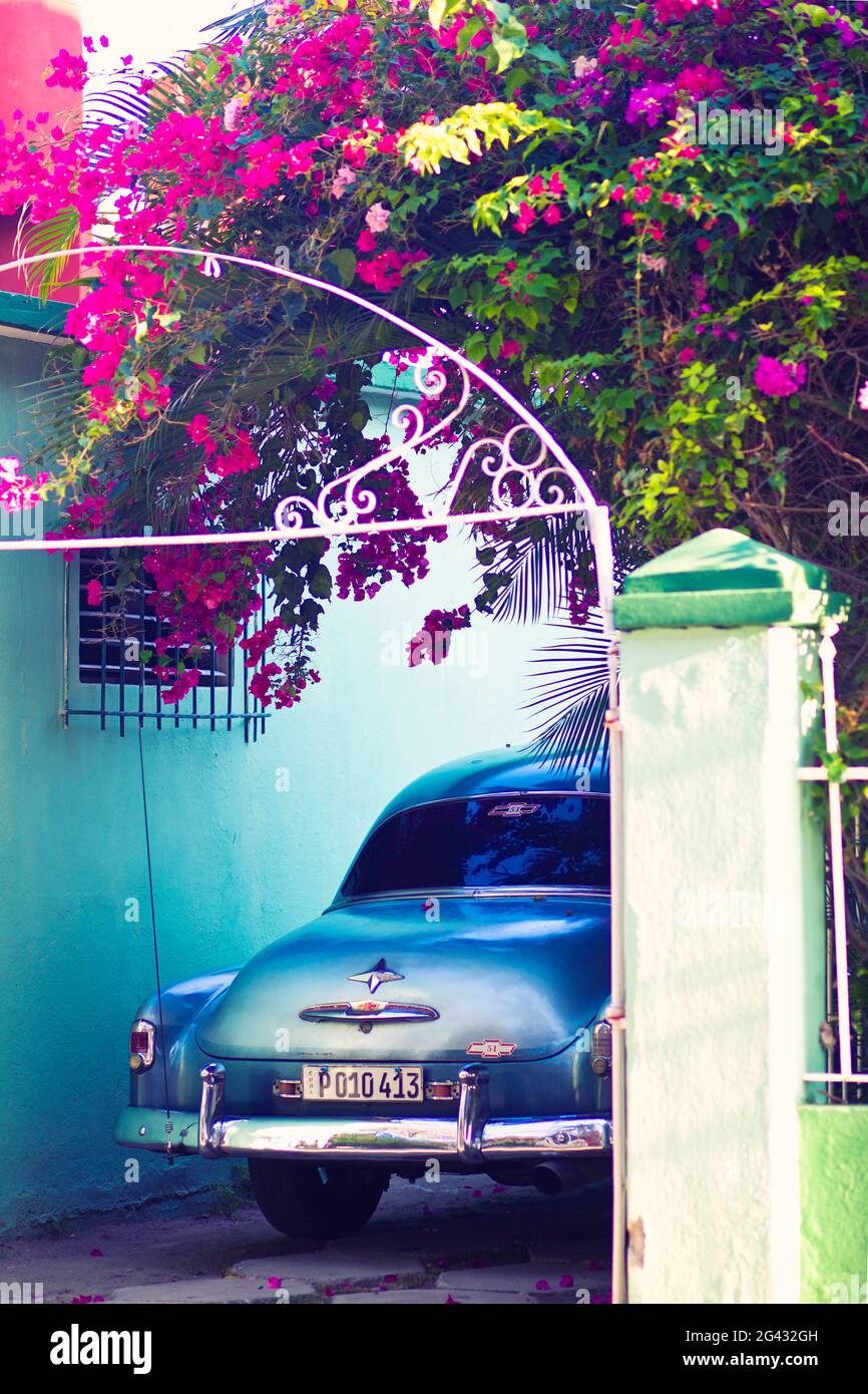 Classic car parked under bougainville tree Stock Photo