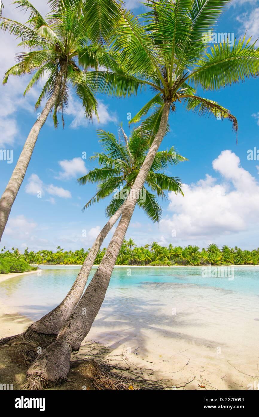 Beach with palm trees at the lagoon of Fakarava, French Polynesia. Stock Photo