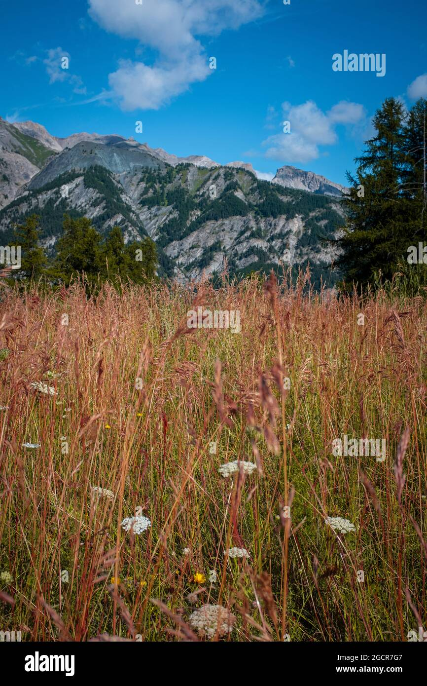 Mountain landscape ground pov with yellow grass and beautiful top view - blue sky with clouds - environment and nature outdoor panorama Stock Photo