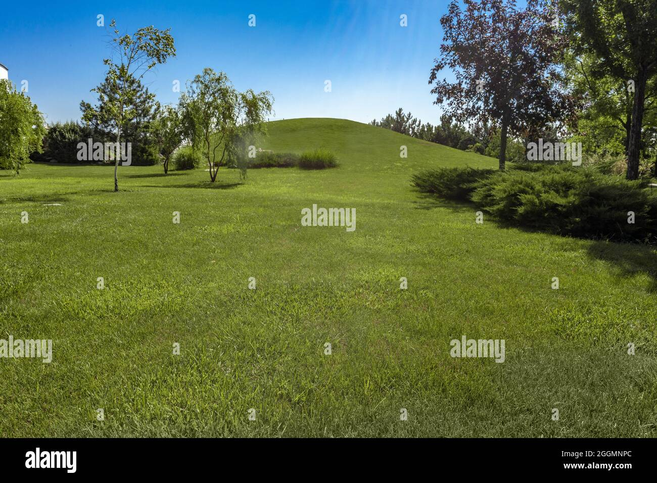 Summer landscape with hill covered with green grass surrounded by trees Stock Photo