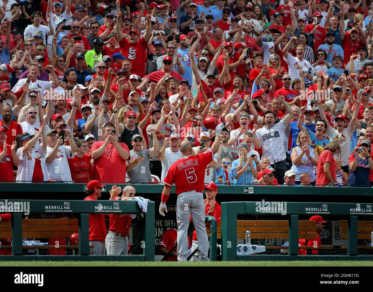 St. Louis, USA. 22nd June, 2019. The Los Angeles Angels' Albert Pujols acknowledges the crowd with a curtain call after hitting a solo home run against the St. Louis Cardinals at Busch Stadium in St. Louis, Missouri, on Saturday, June 22, 2019. (Photo by Christian Gooden/St. Louis Post-Dispatch/TNS/Sipa USA) Credit: Sipa USA/Alamy Live News Stock Photo