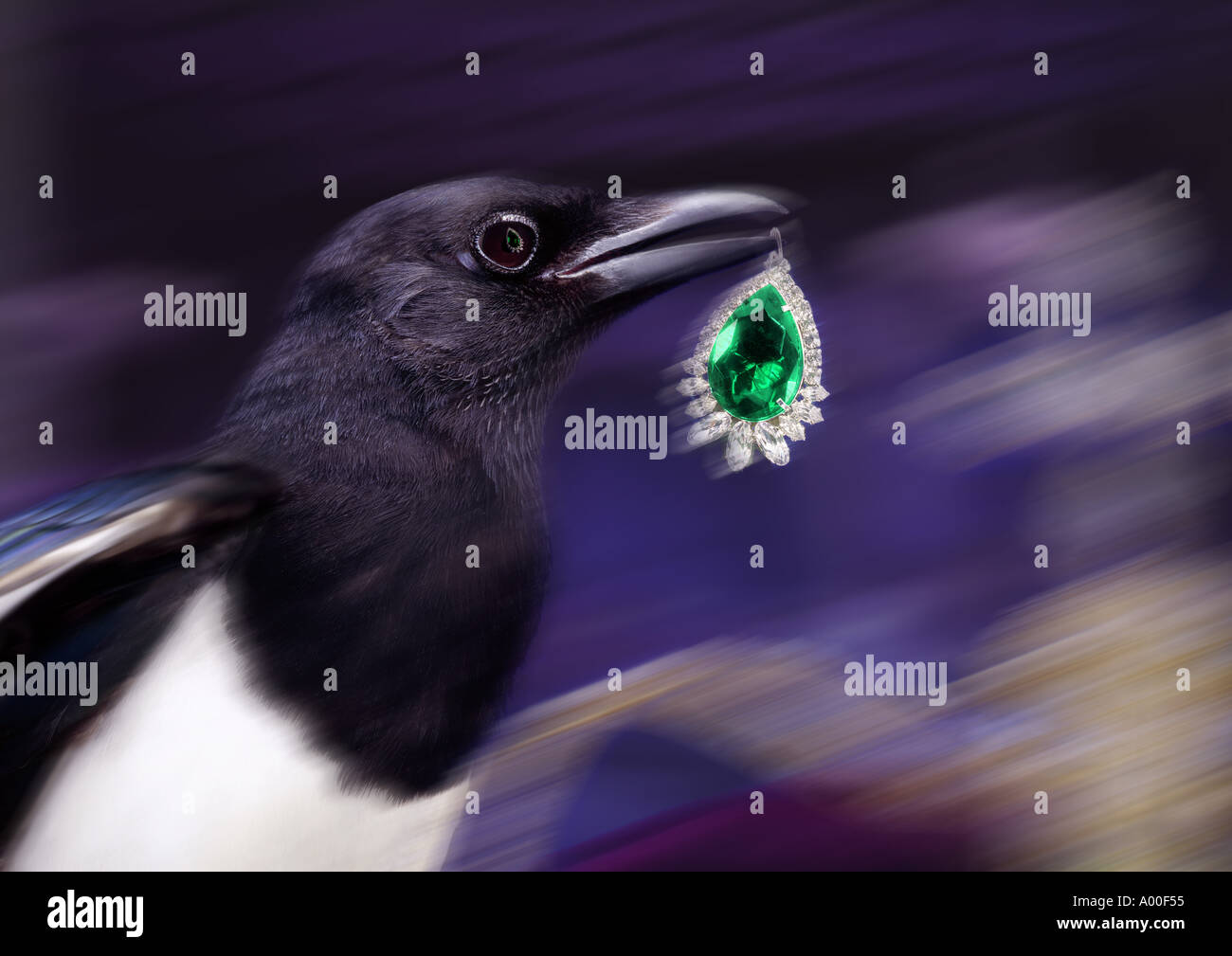thieving magpie - Stock Image