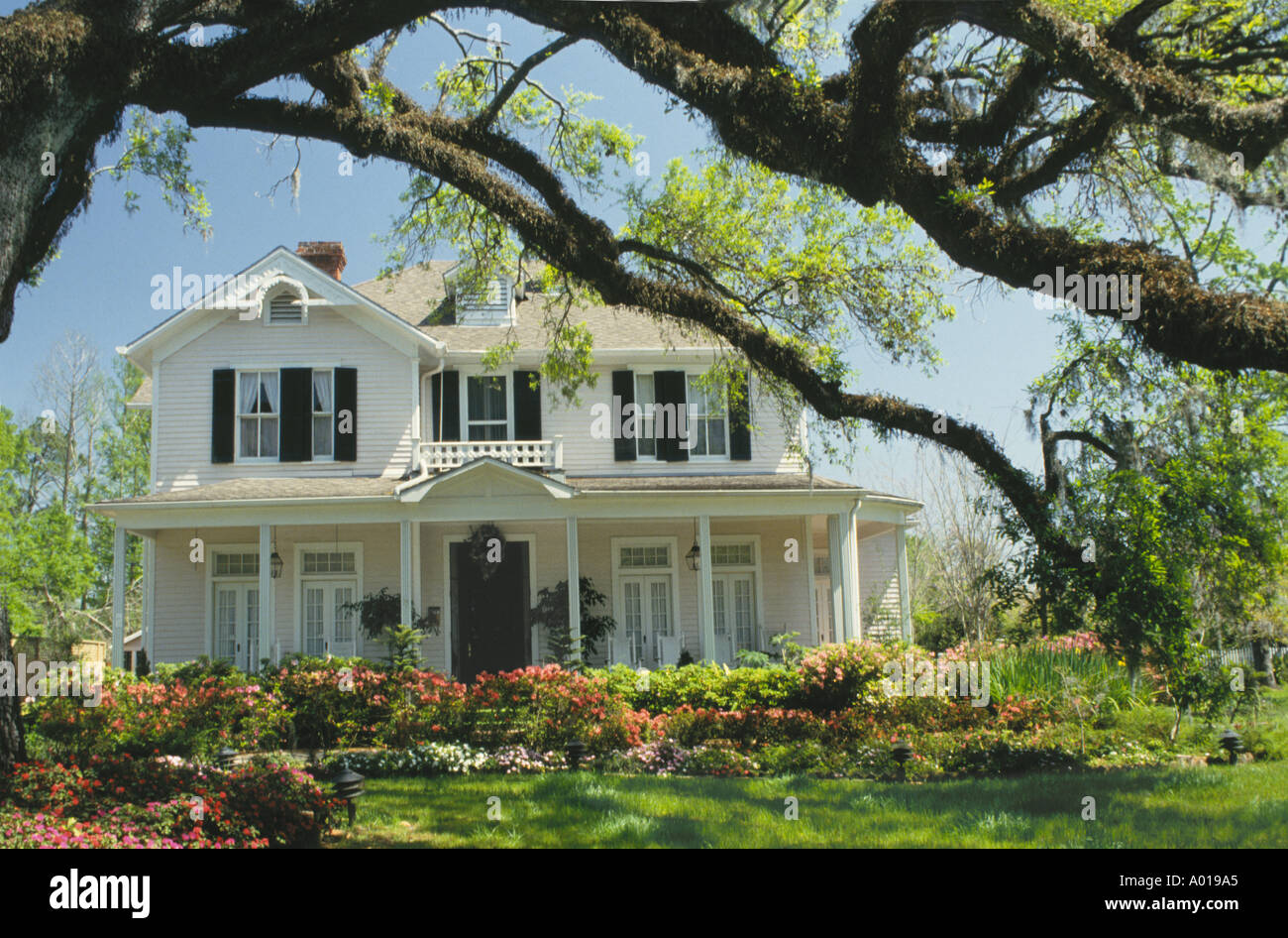 Large high end Victorian style home with wide porches and landscaped garden framed by mature live Oak tree, Louisiana USA - Stock Image