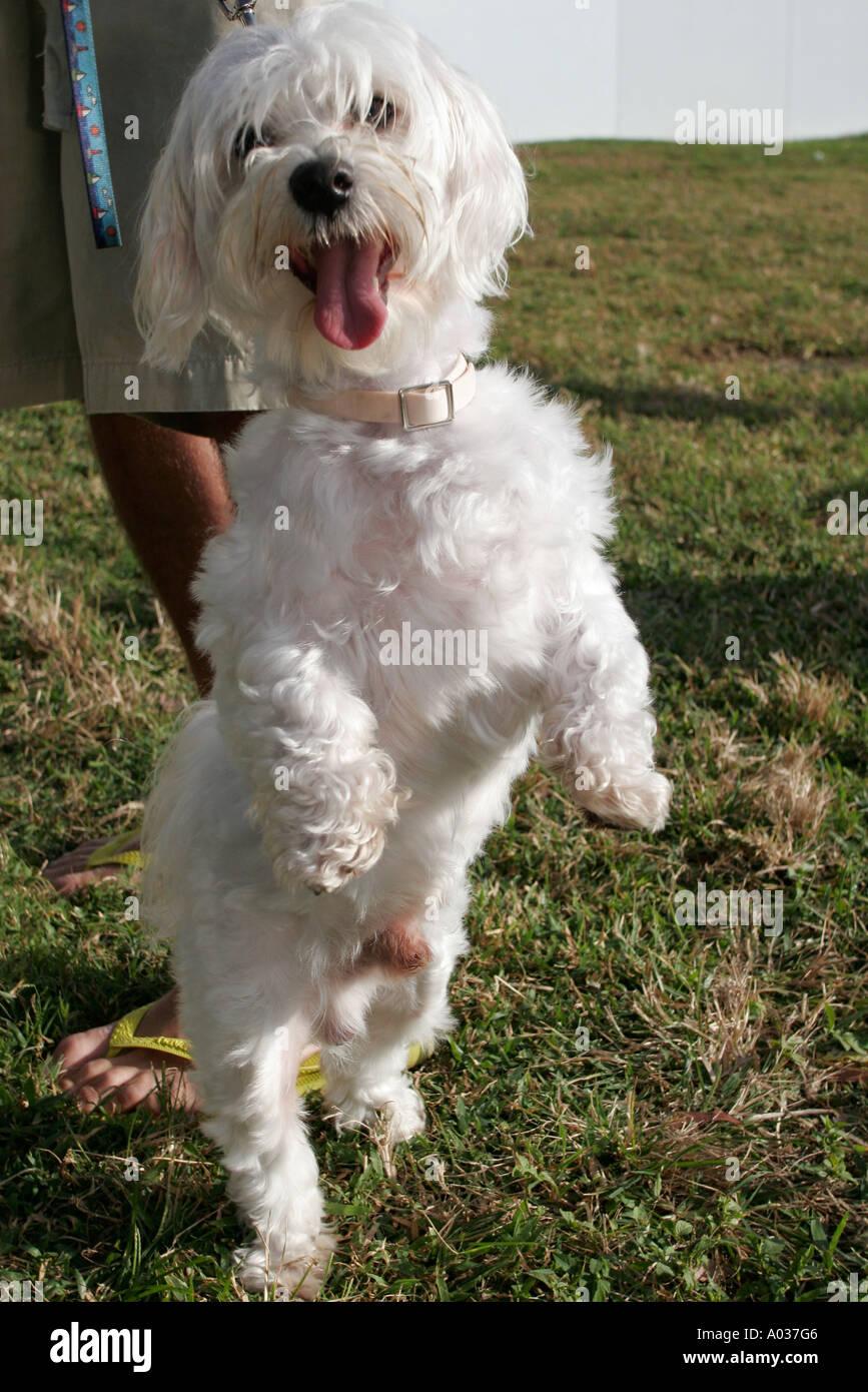 Miami Beach Florida South Pointe Park Pet Rescue dog owner