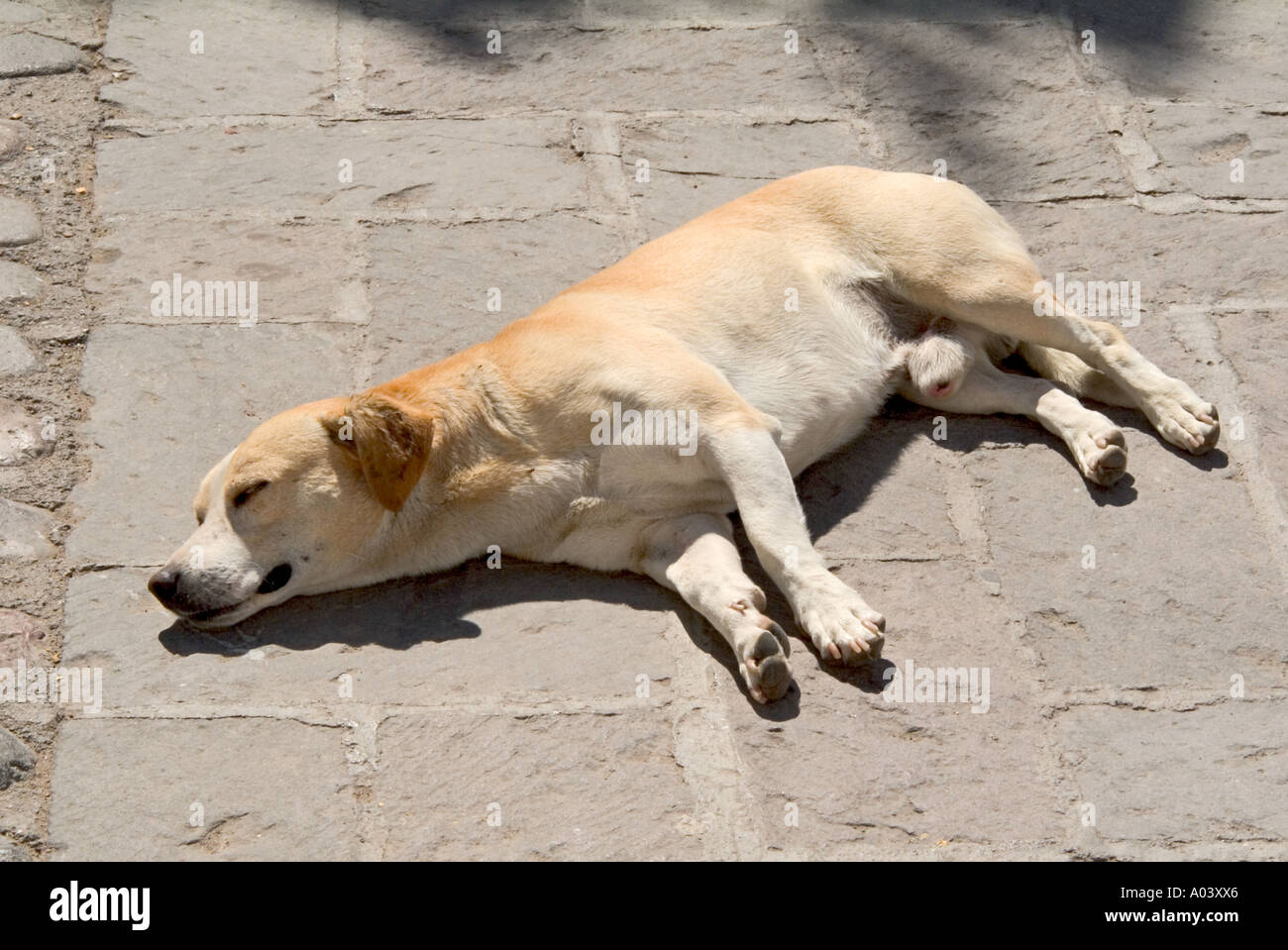 Image depicting the old addage let sleeping dogs lie Stock Photo