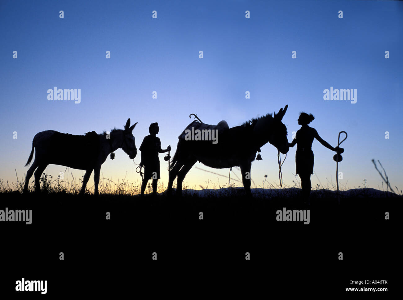 Road to Santiago, Donkey friends rehearse the capacity for the pilgrimage , Madrid , Spain , Europe Stock Photo