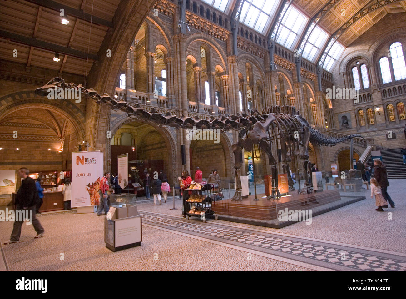 Exhibits in Natural History Museum South Kensington London England Britain GB UK - Stock Image