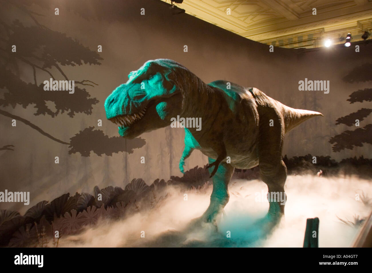 Tyrannosaurus exhibit in the Natural History Museum, South Kensington London UK - Stock Image