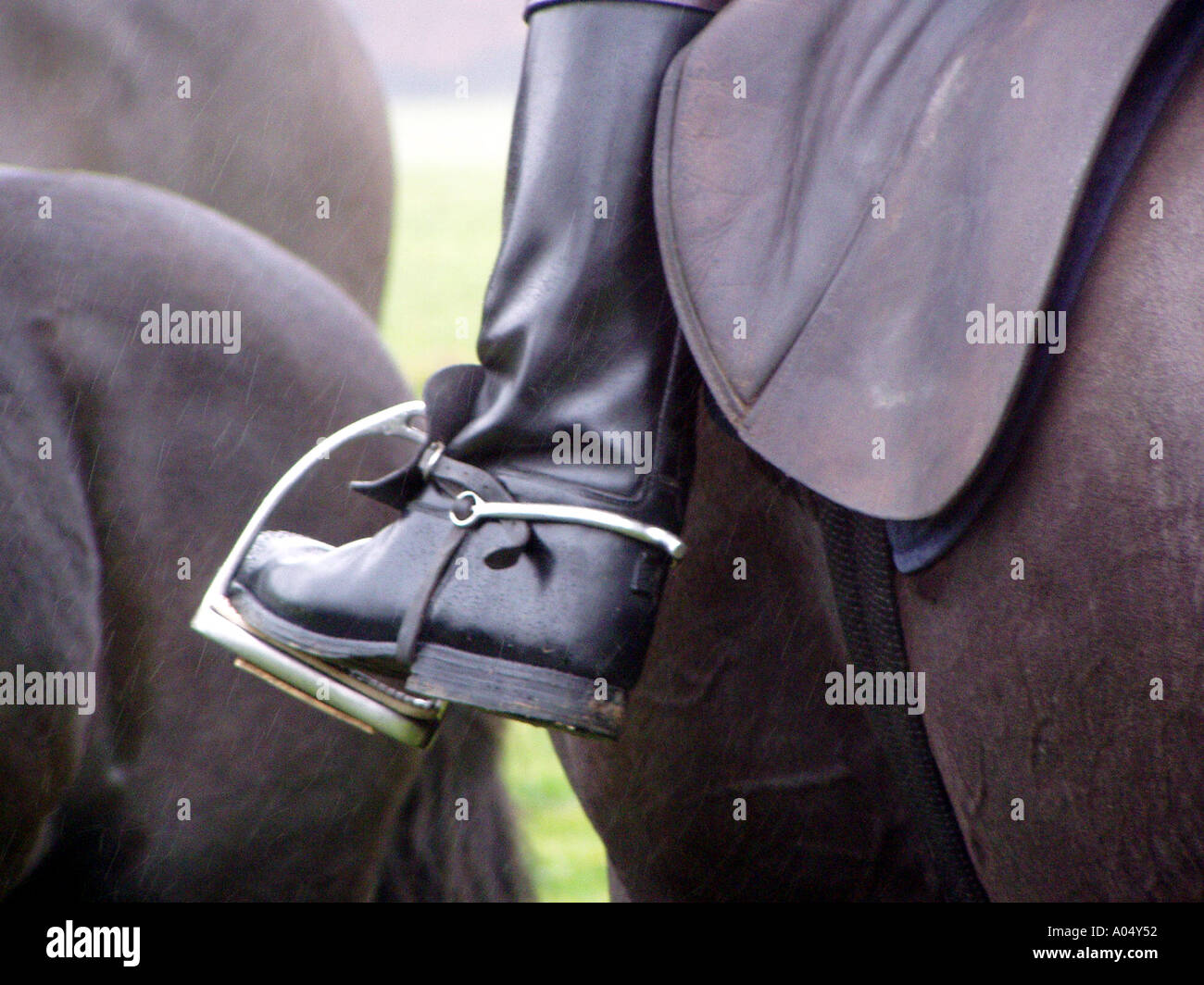 close up horse riders black leather boot in stirrup on a horse