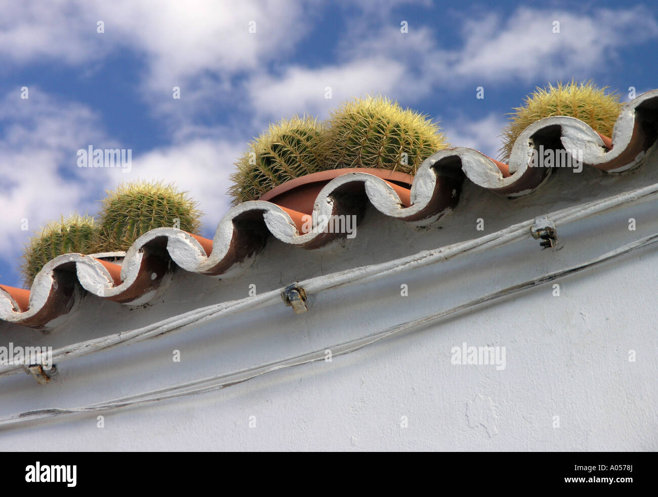 Diagonal terracotta tiled roof with round cacti growing in a row on top - Stock Image