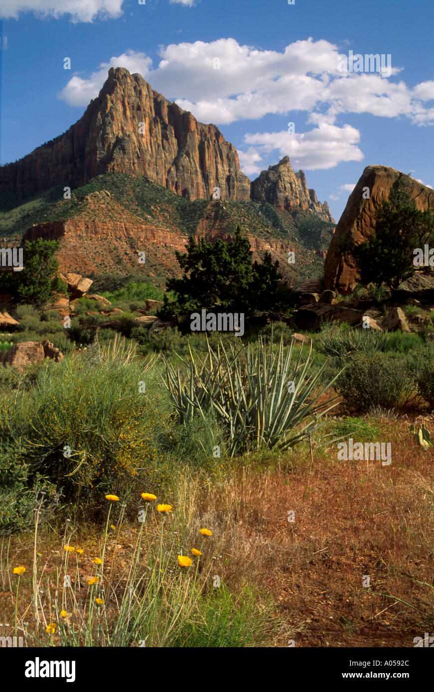 PZ-5 WATCHMAN MOUNTAIN AND FLOWERS - Stock Image
