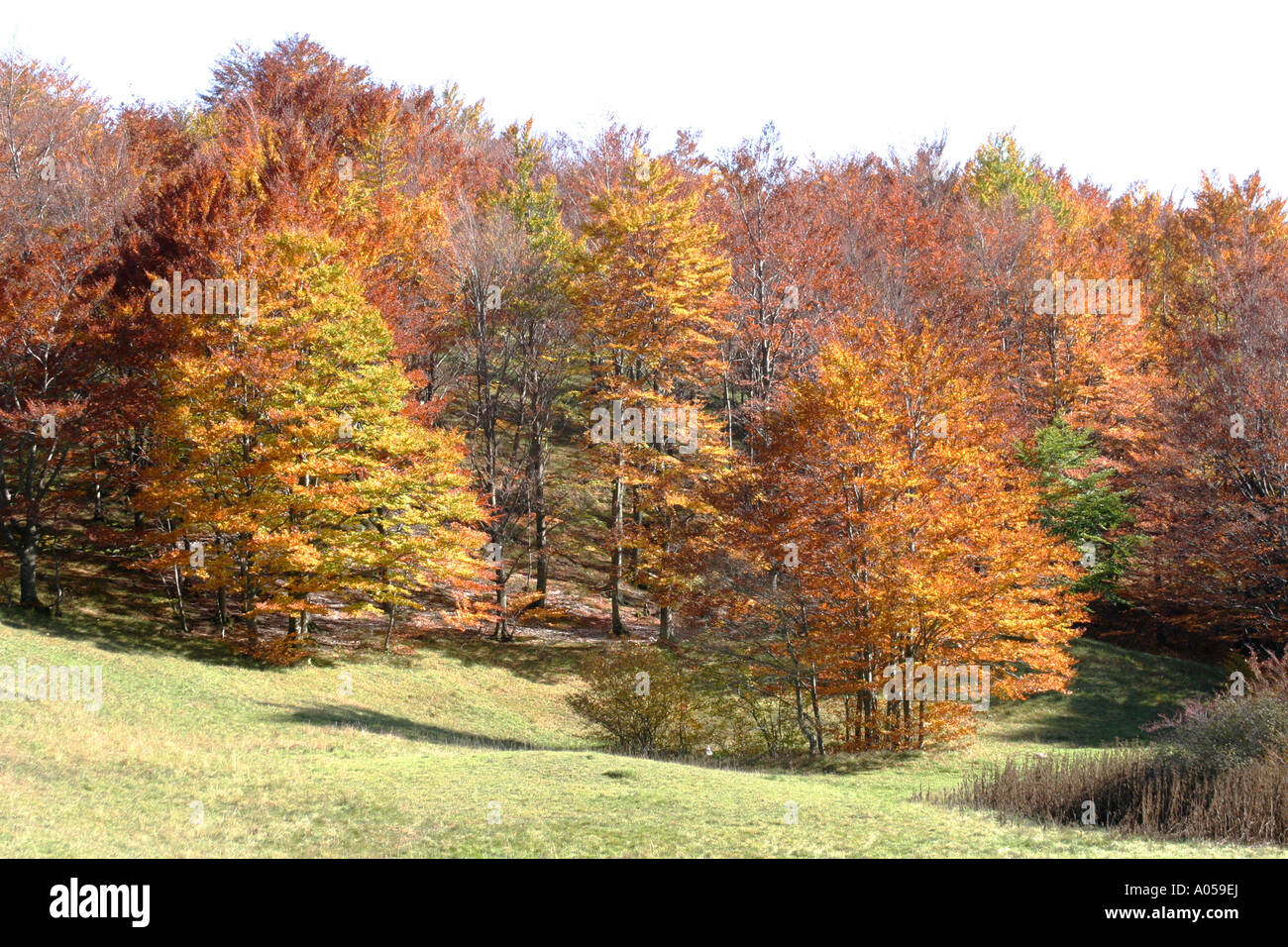 Beautiful fall/ Autumn colors of the trees in the Sibillini National Park,Le Marche ,Italy Stock Photo