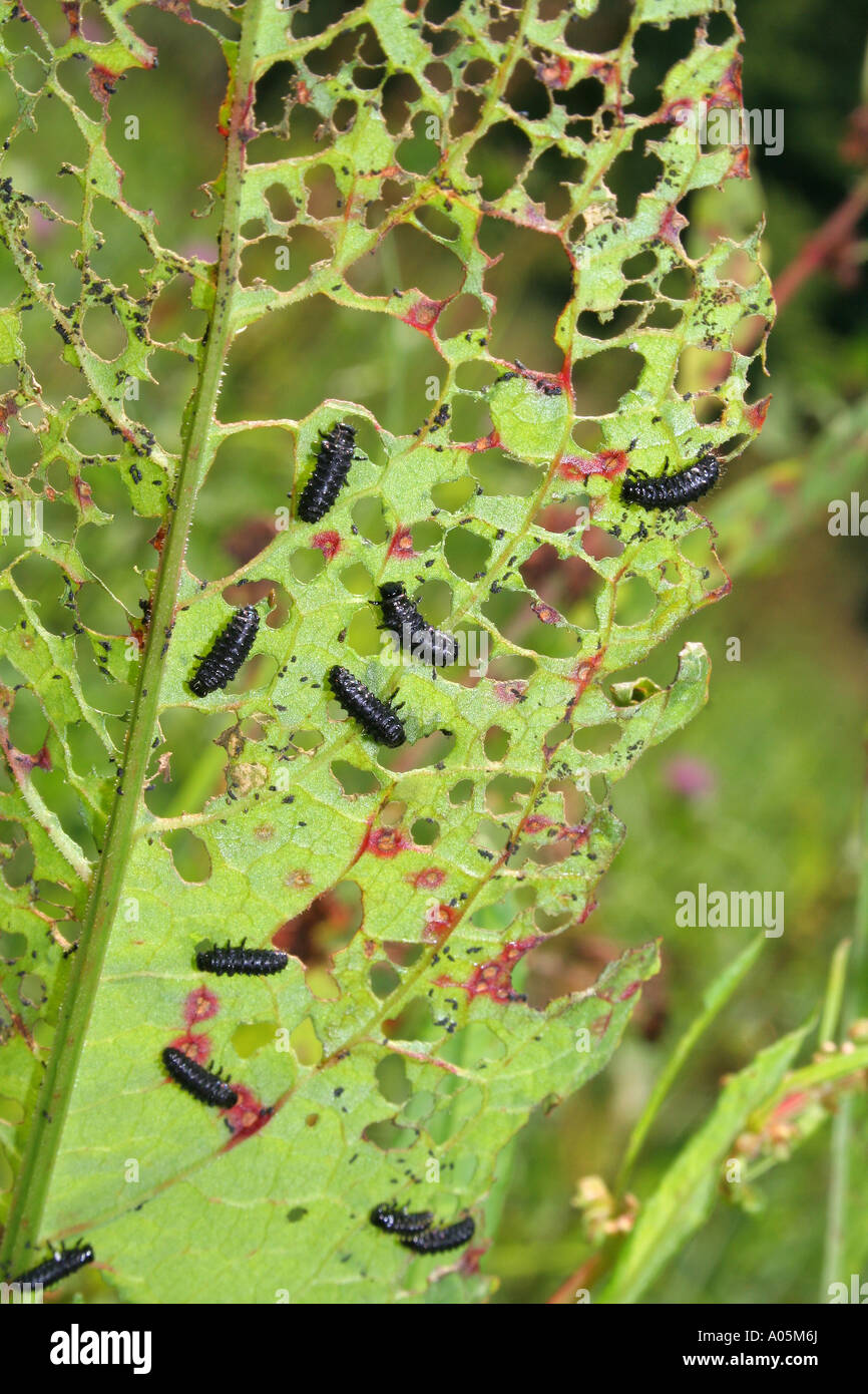 insect pests Stock Photo