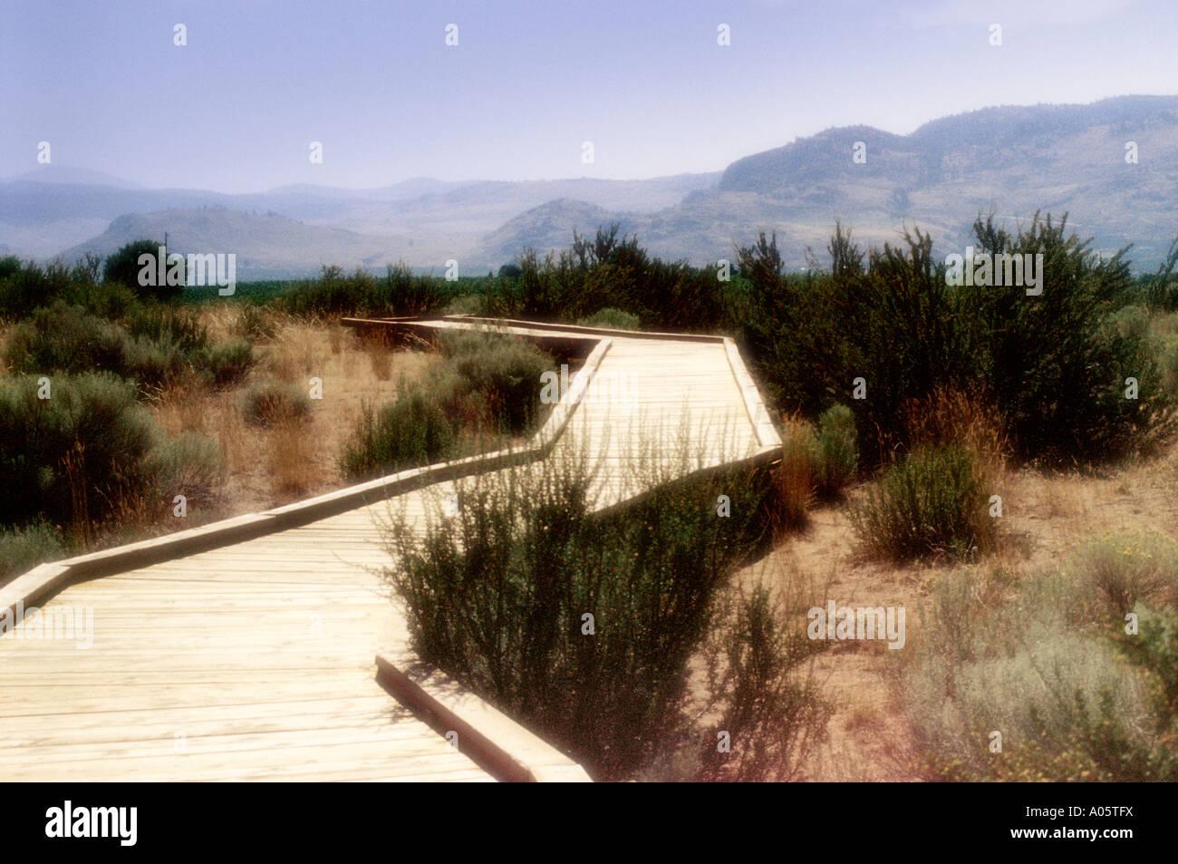 A Walk in the Osoyoos Desert Centre, British Columbia, Sonoran desert, Canada Stock Photo