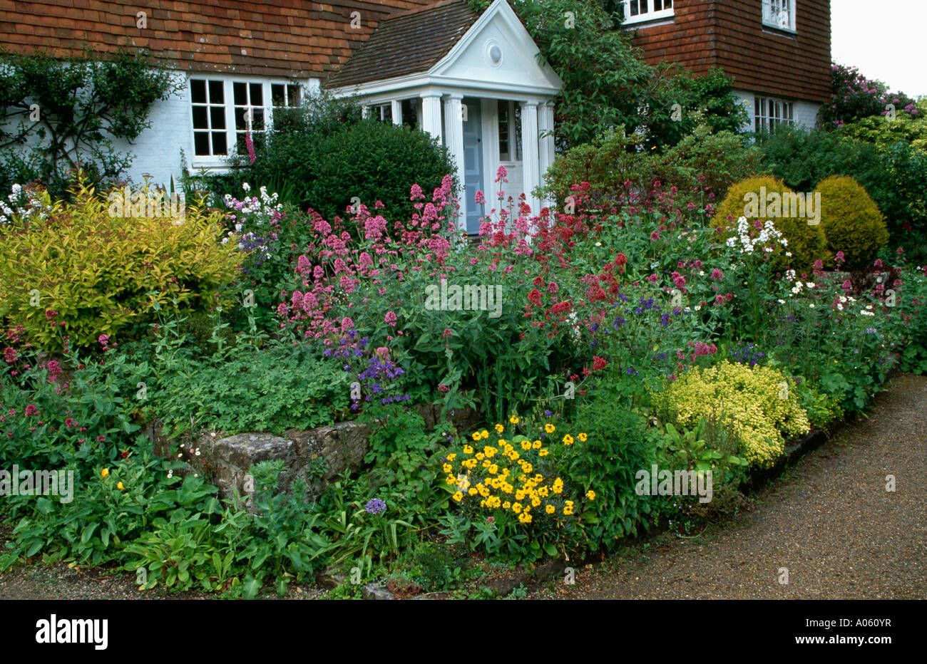 Pink Phlox In And Small Shrubs In Cottage Garden Border In Front