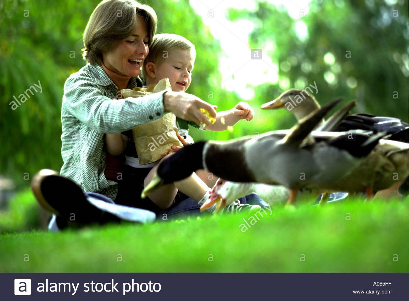 Mom And Son Feeding Ducks Stock Image