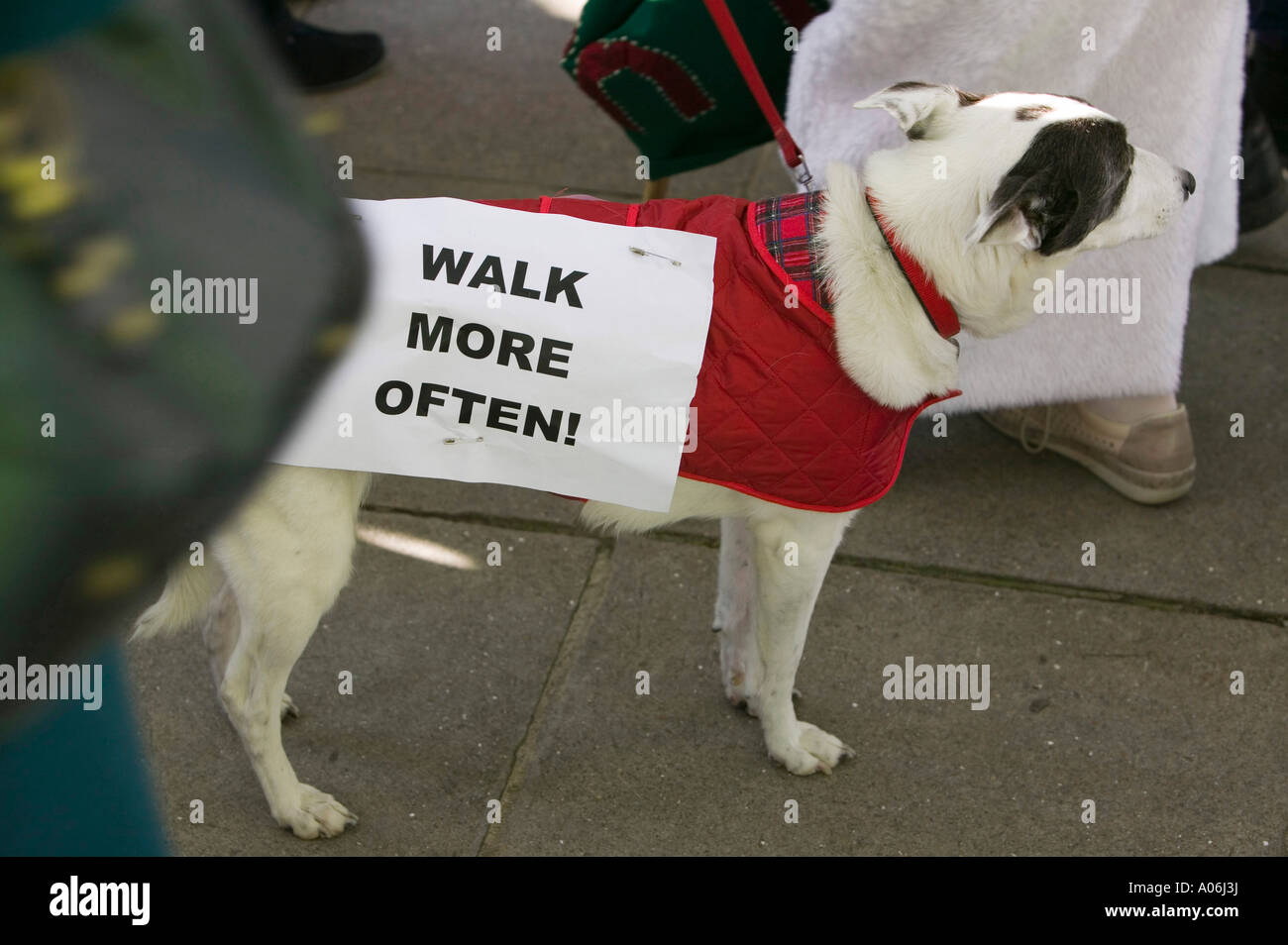 a dog at the I Count climate change rally in Russell Square, London, UK - Stock Image