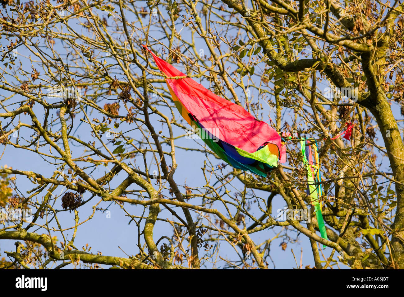a kite stuck in a tree Stock Photo: 9897131 - Alamy