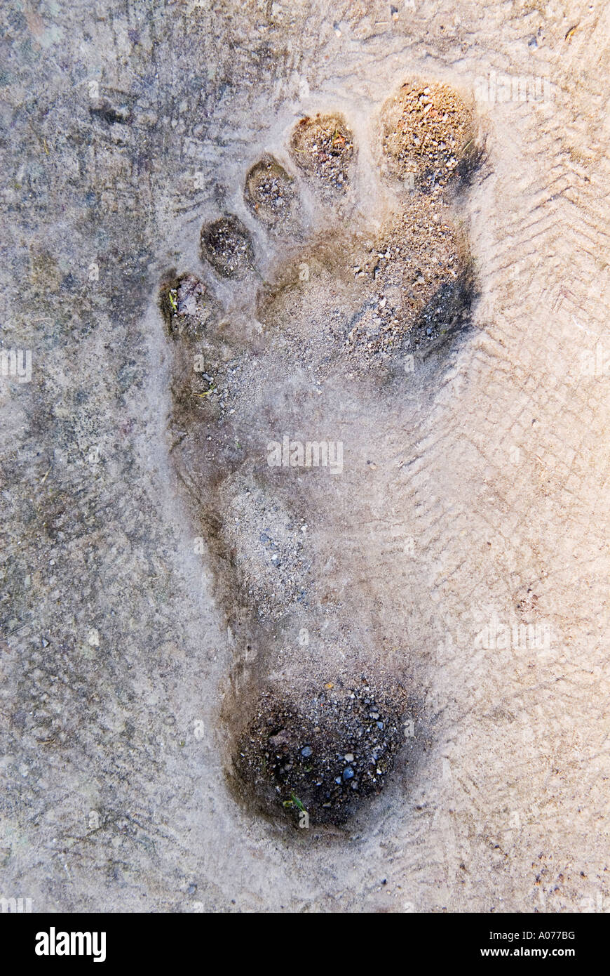 Footprint in cement - Stock Image