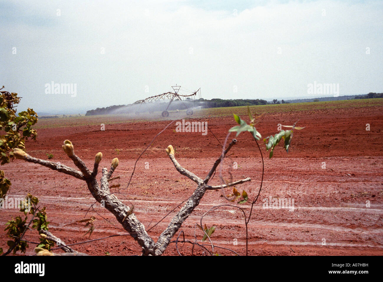 Irrigation of sugarcane plantation in a former cerrado vegetation area - Stock Image