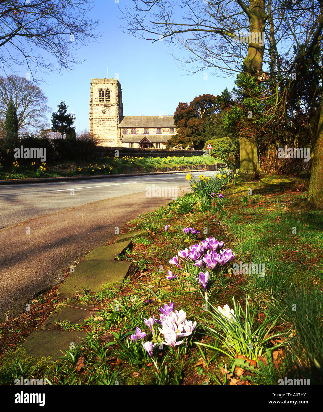 Crocuses and St Wilfreds Parish Church in Spring, Mobberley, Cheshire, England, UK - Stock Image