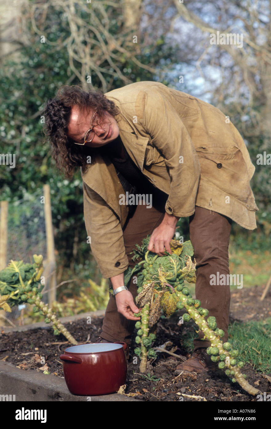 Hugh Fearnley Whittingstall TV food Chef collects sprouts at the River Cottage in Dorset - Stock Image