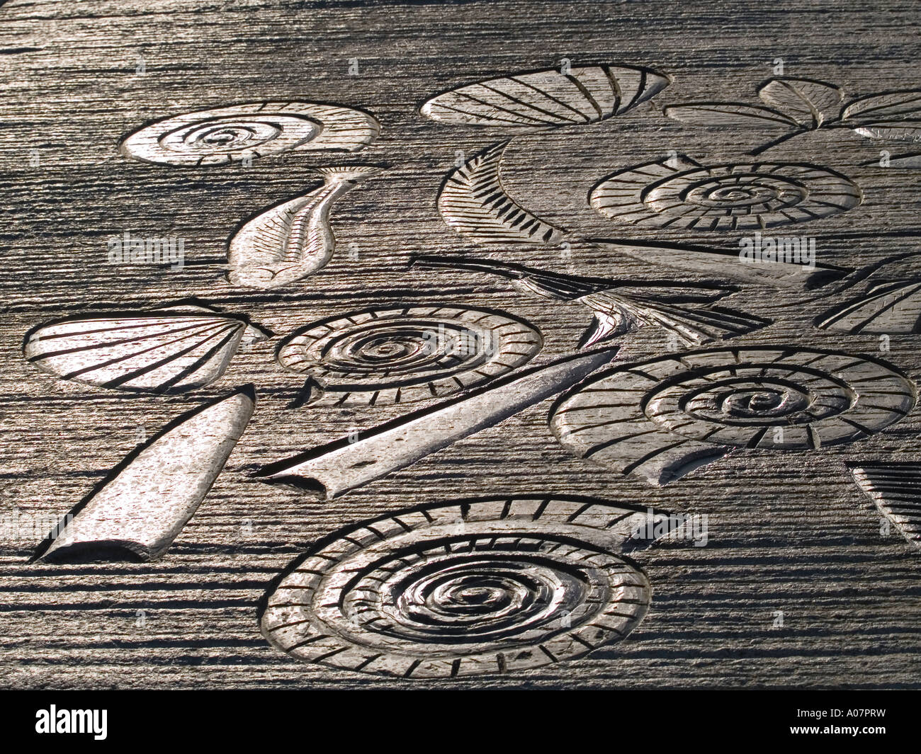 Concrete pavement embossed with depictions of fossils at Whitby North Yorkshire - Stock Image