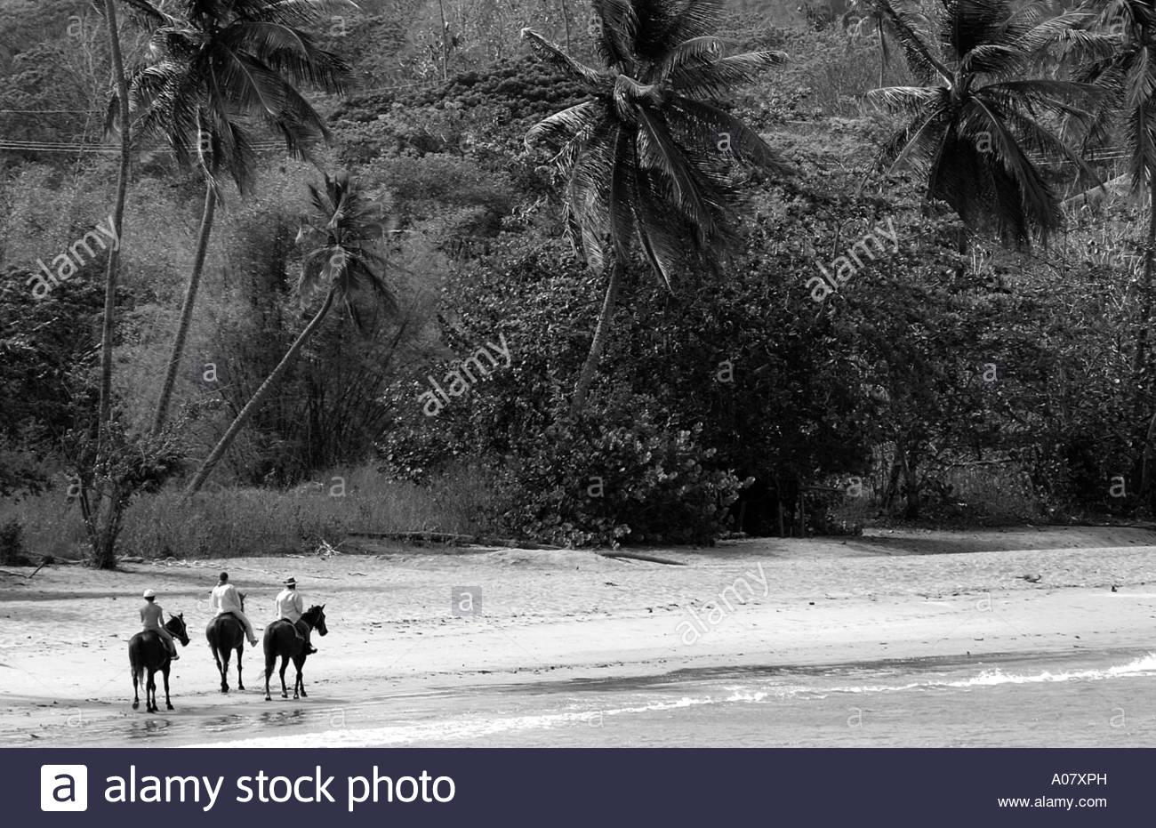 Tobago, Courland Bay Horse Riding - Stock Image