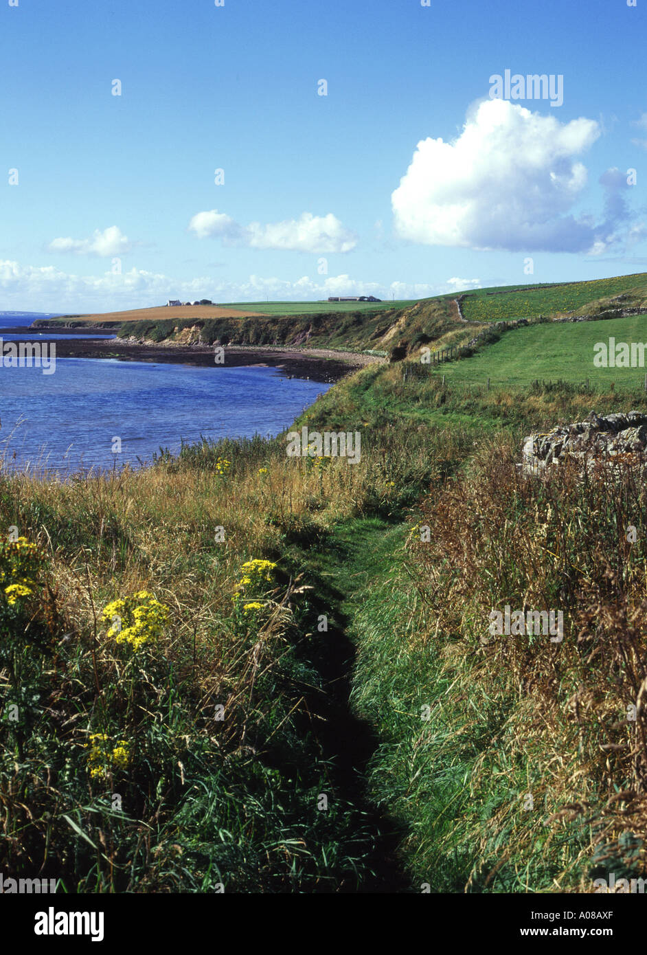 dh Foot path walk SCAPA BAY ORKNEY Cliff top footpath scotland Stock Photo