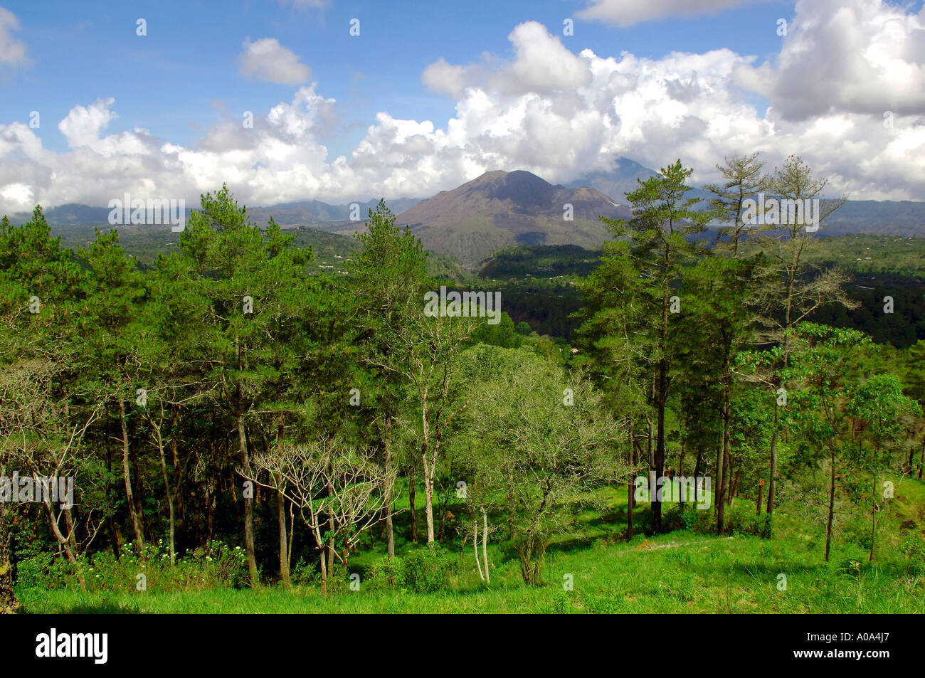 Trees and mountainous skyline, interior of Bali Indonesia with Gunung Lesong, Sangiyang and Batukau - Stock Image