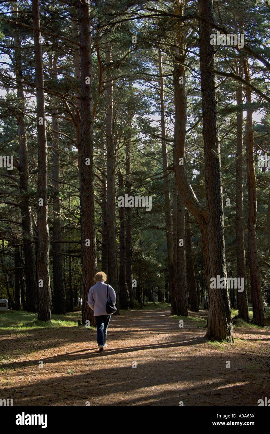 Walking in Glenmore Forest Park Rothiemurchus Aviemore Cairngorm National Park Scottish Highlands Stock Photo