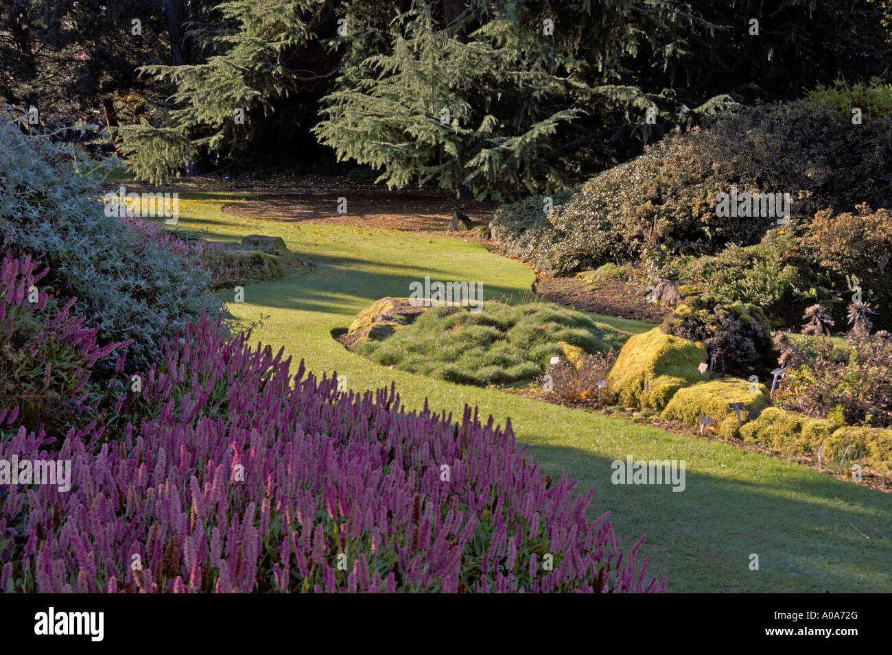 Japanese Rock Garden Royal Botanic Garden Edinburgh Inverleith Autumn colours - Stock Image