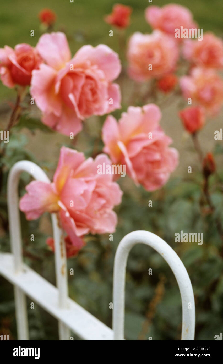 Painted Roses Stock Photos & Painted Roses Stock Images - Alamy