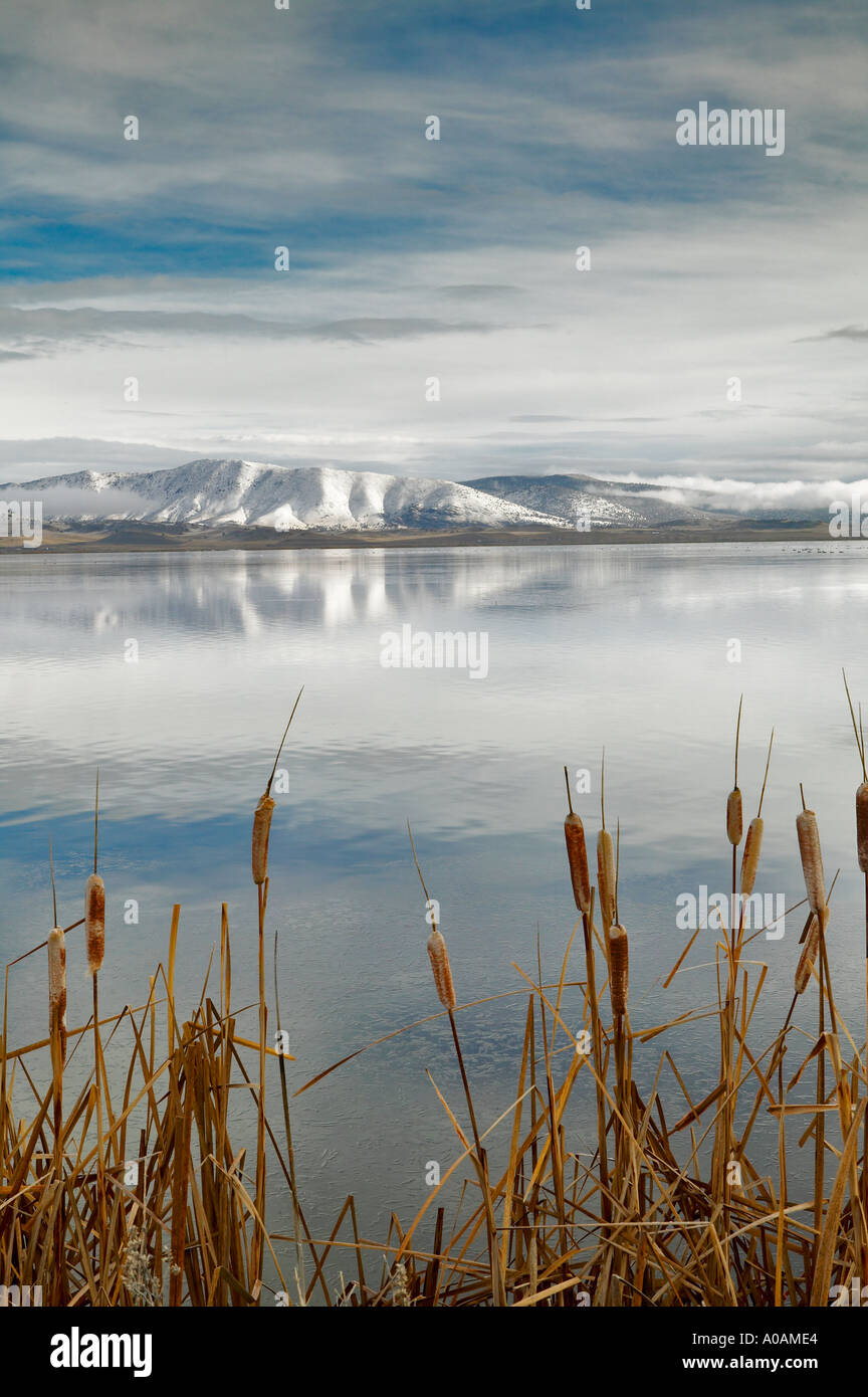 Cattails and reflection in Lower Klamath Lake National Wildlife Refuge California - Stock Image