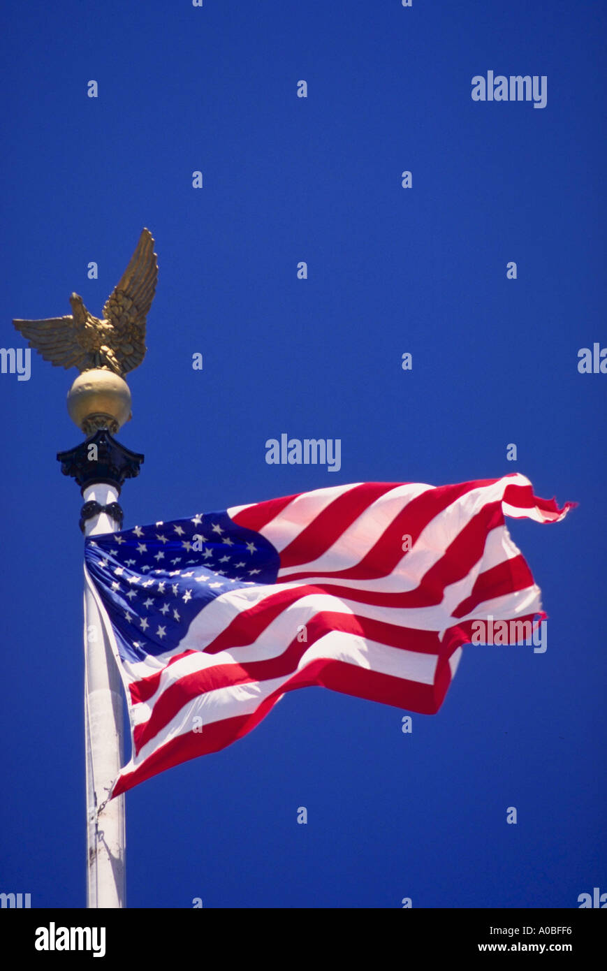Eagle and American flag - Stock Image