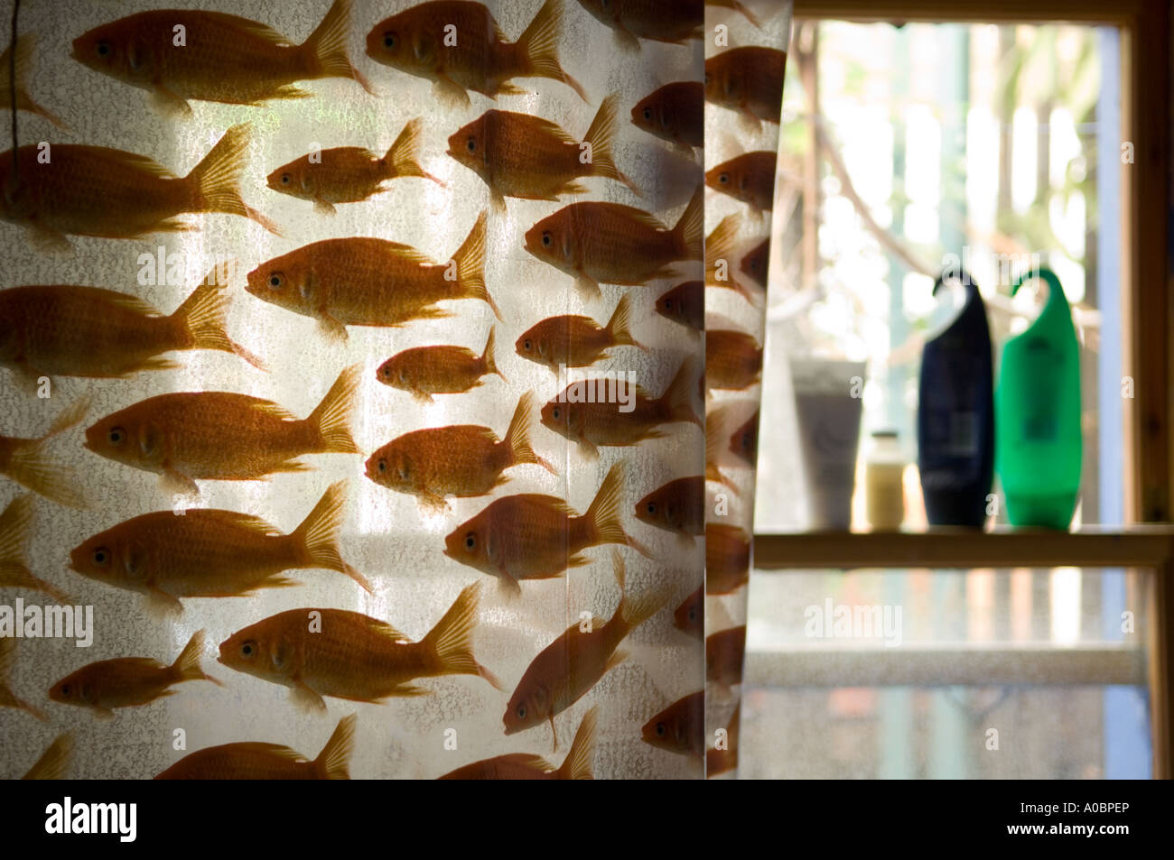 Shower Curtain With Goldfish Design