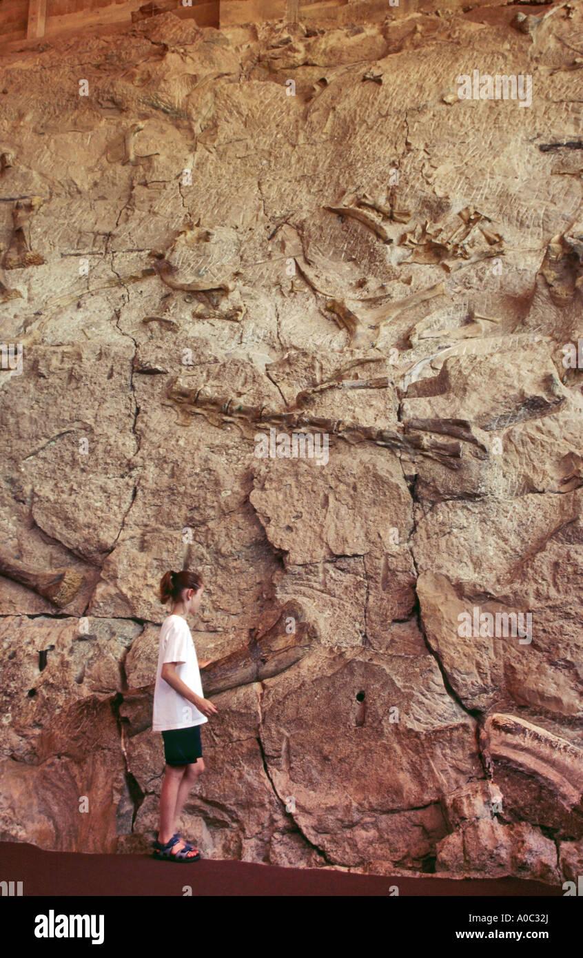 Fossil bones display at Dinosaur Quarry,  Visitor center, Dinosaur National Monument, Utah, USA - Stock Image
