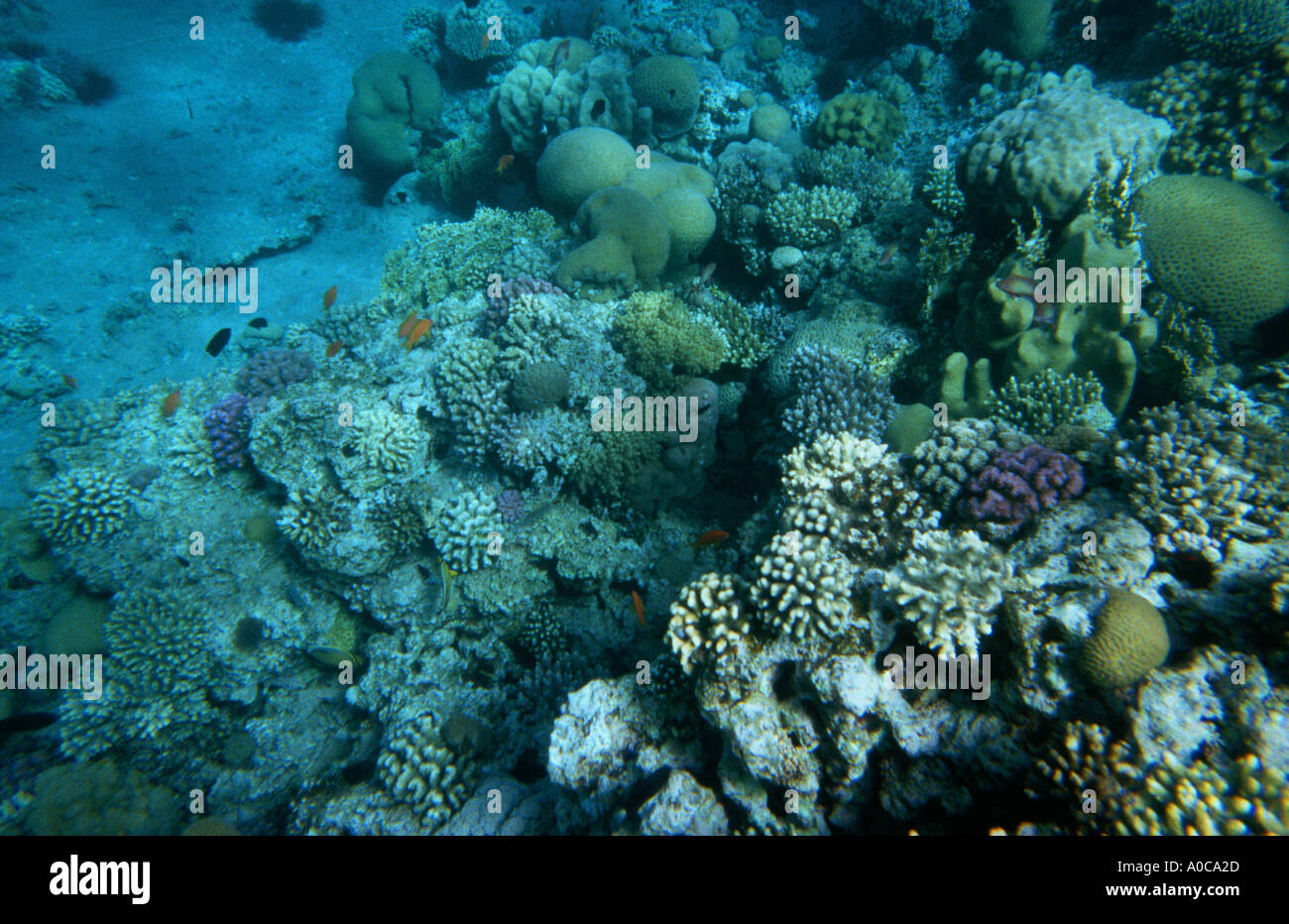 JORDAN AQABA RED SEA the royal diving center Jordan Royal ecological Diving Society coral reef reefs fish Stock Photo