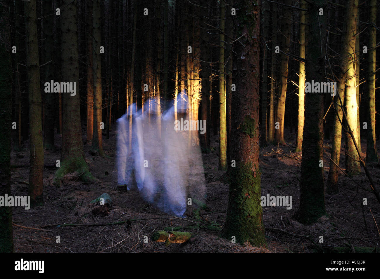 Spooky forest - Stock Image