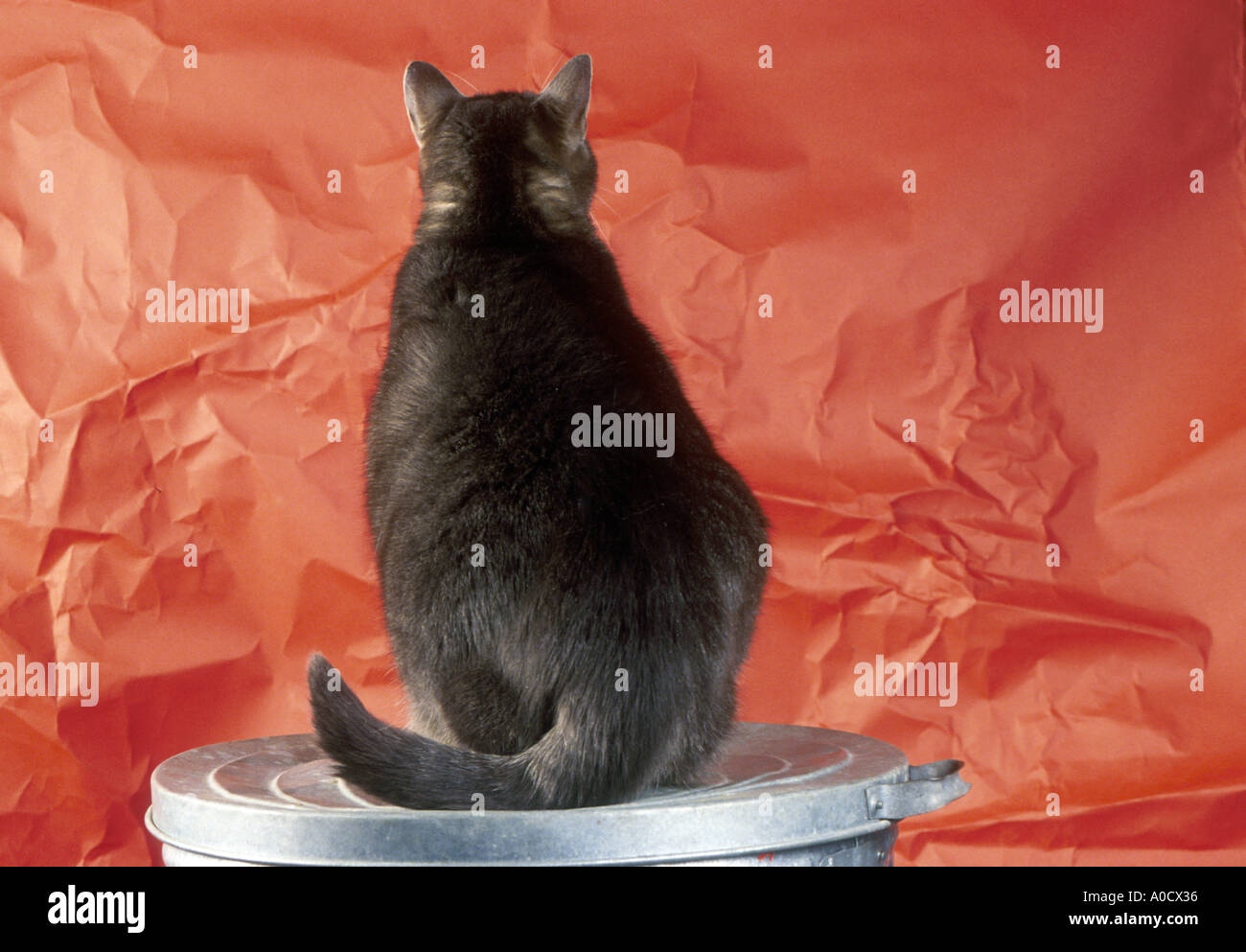 Grey Fat Tiger Cat On Trash Can Stock Photo 3250741 Alamy