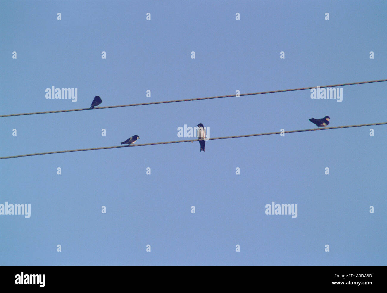 Birds on wire Stock Photo
