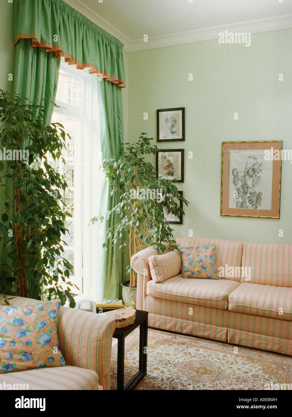 Tall Green Houseplants And Pale Green Curtains Edged With Peach In Stock Photo 9970144 Alamy