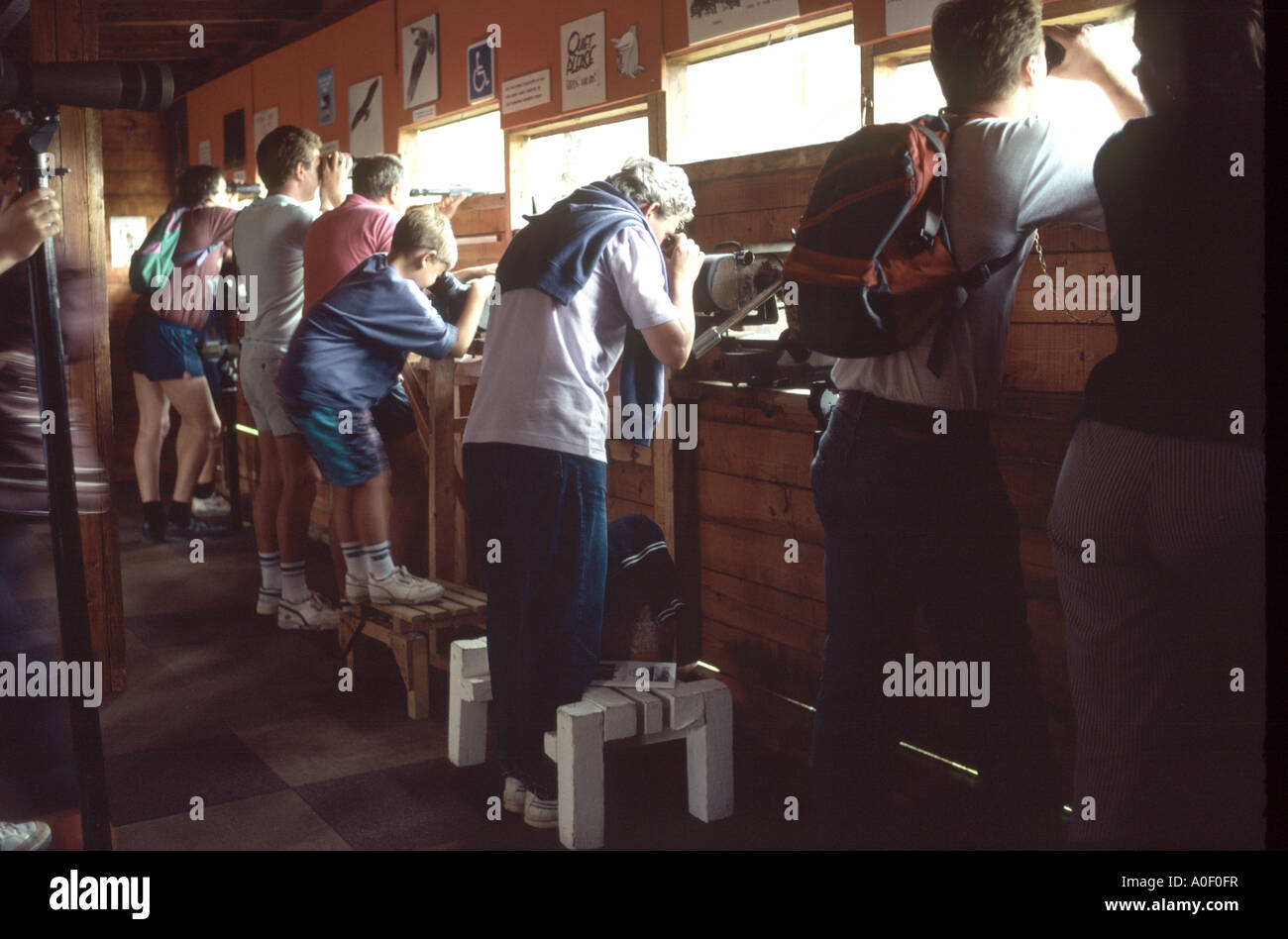 Bird watchers observing birds in a hide - Stock Image