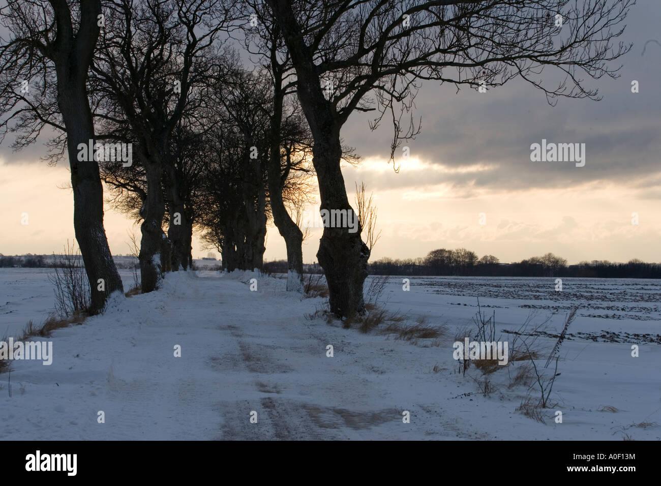 snowroad in skåne - Stock Image