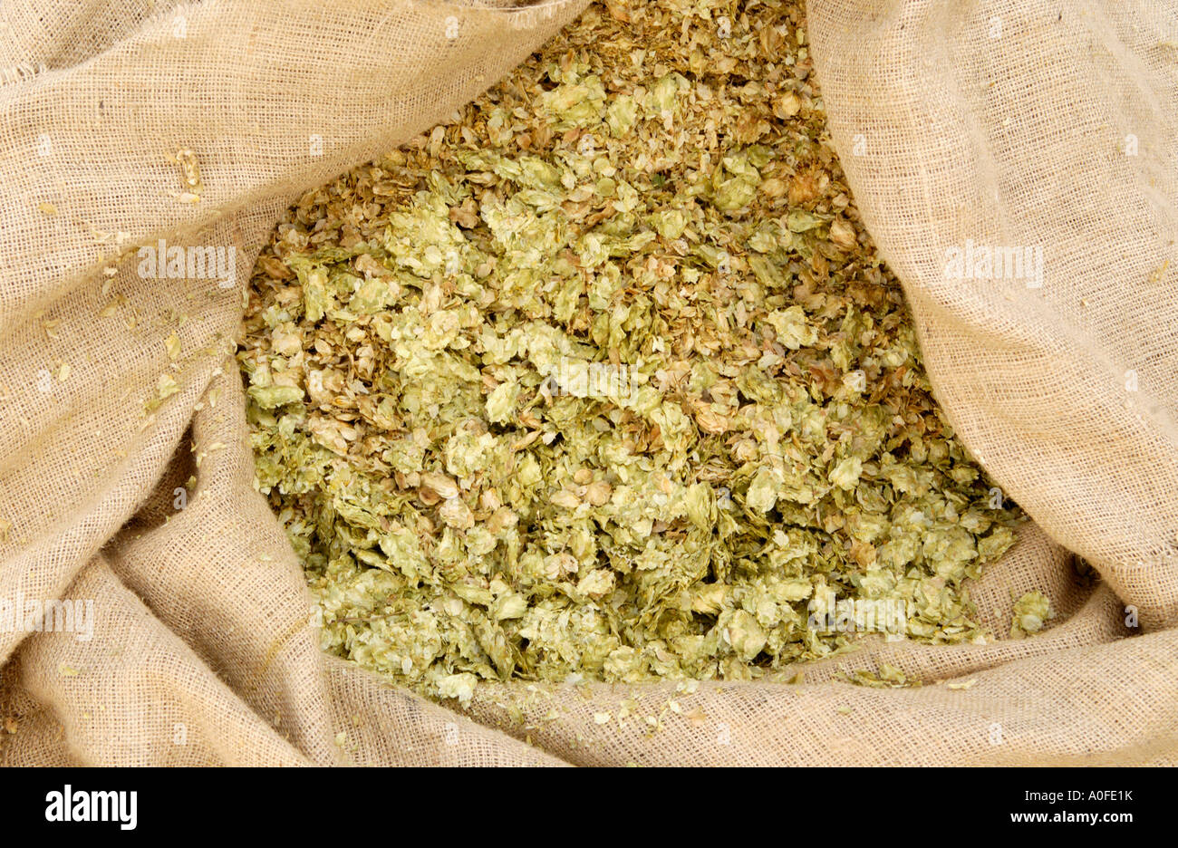 Sack of hops used for making beer in the Teme Valley Brewery behind The Talbot at Knightwick Worcestershire England UK - Stock Image